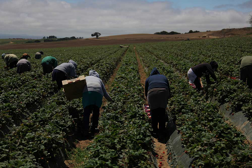 Farm workers in Salinas, California, 2013.